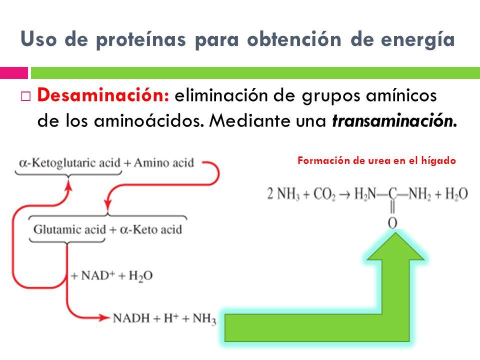 Uso de proteínas para obtención de energía