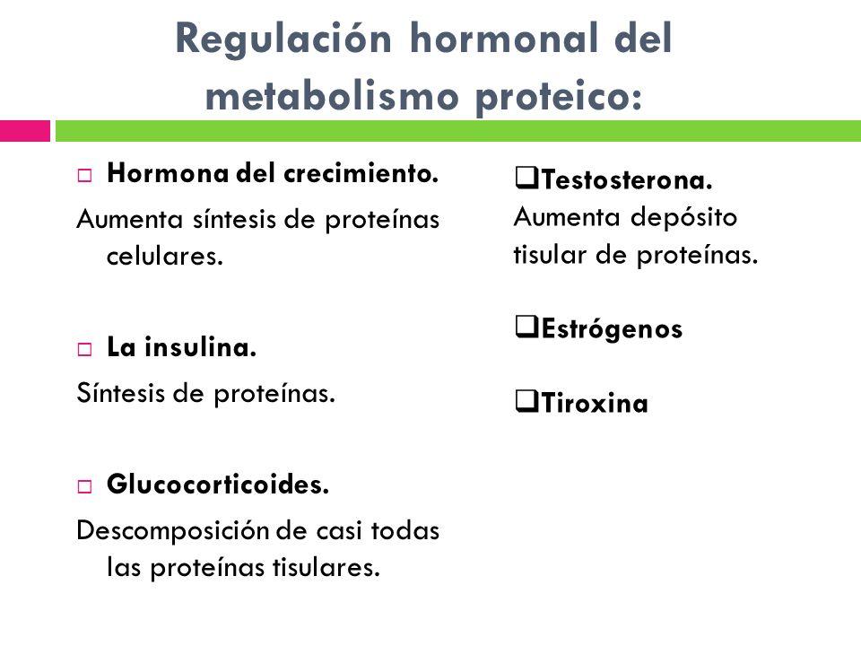 Regulación hormonal del metabolismo proteico: