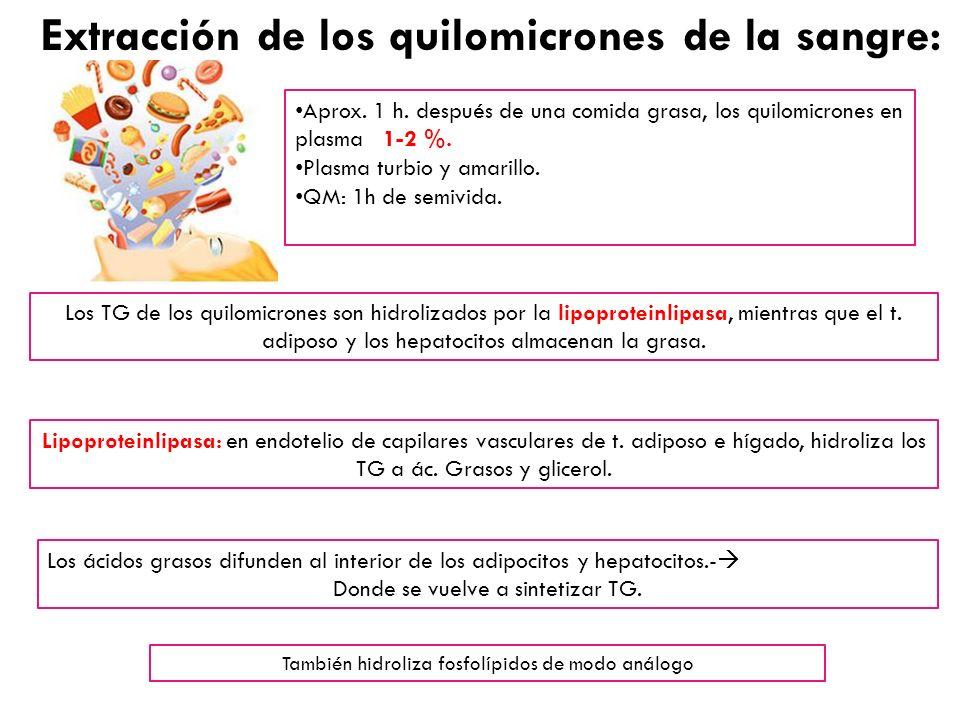 Extracción de los quilomicrones de la sangre: