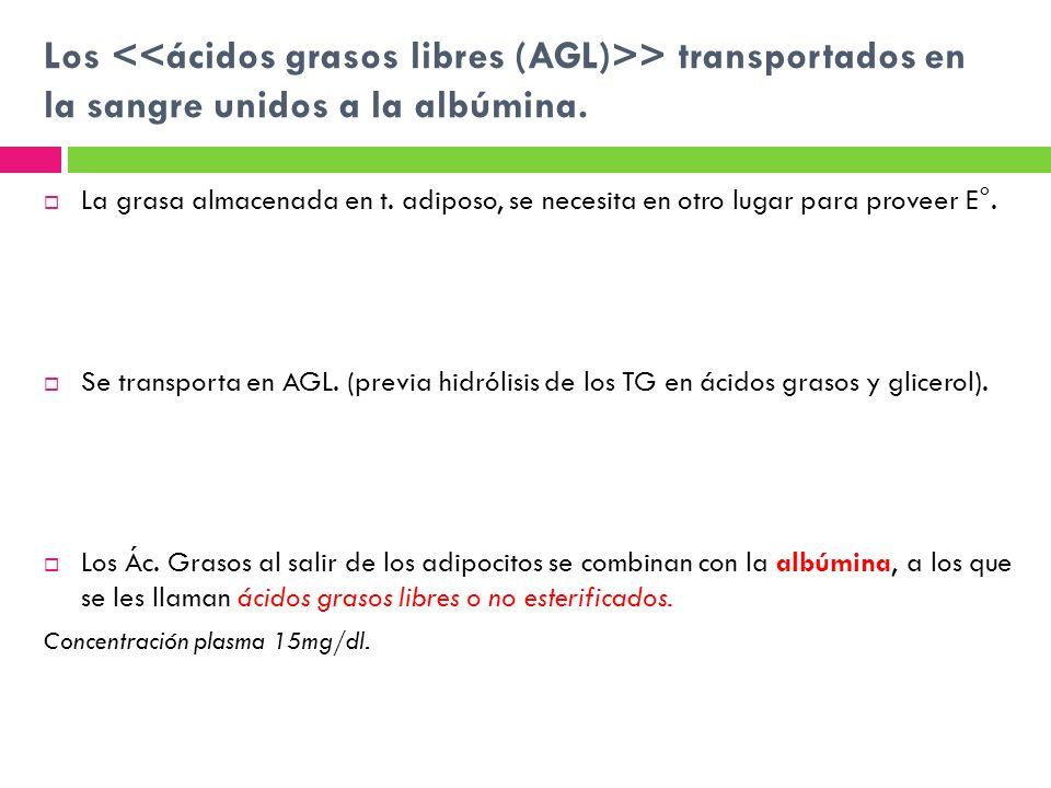 Los <<ácidos grasos libres (AGL)>> transportados en la sangre unidos a la albúmina.