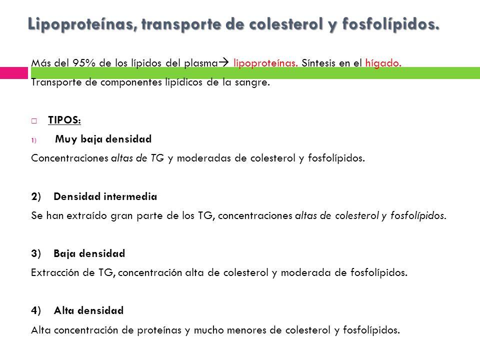 Lipoproteínas, transporte de colesterol y fosfolípidos.