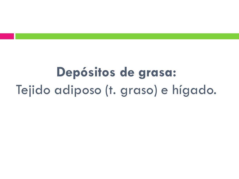 Depósitos de grasa: Tejido adiposo (t. graso) e hígado.