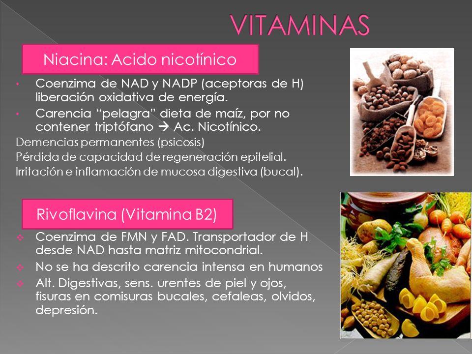 VITAMINAS Niacina: Acido nicotínico Rivoflavina (Vitamina B2)