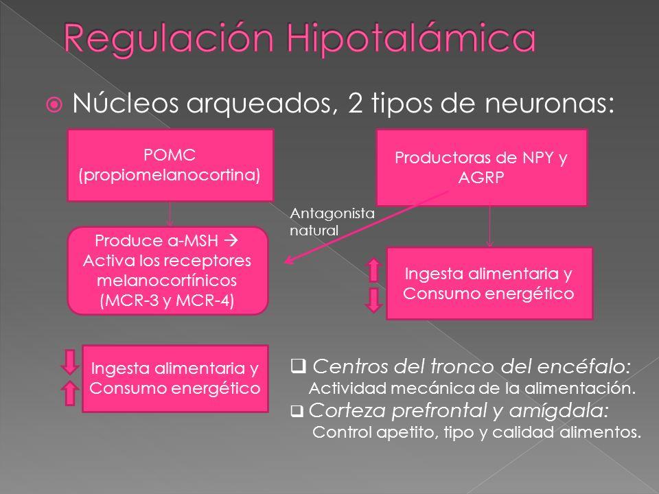 Regulación Hipotalámica