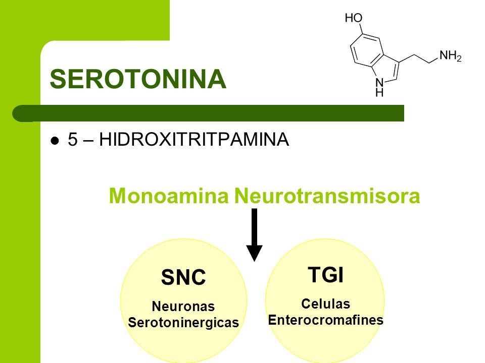 SEROTONINA Monoamina Neurotransmisora TGI SNC 5 – HIDROXITRITPAMINA