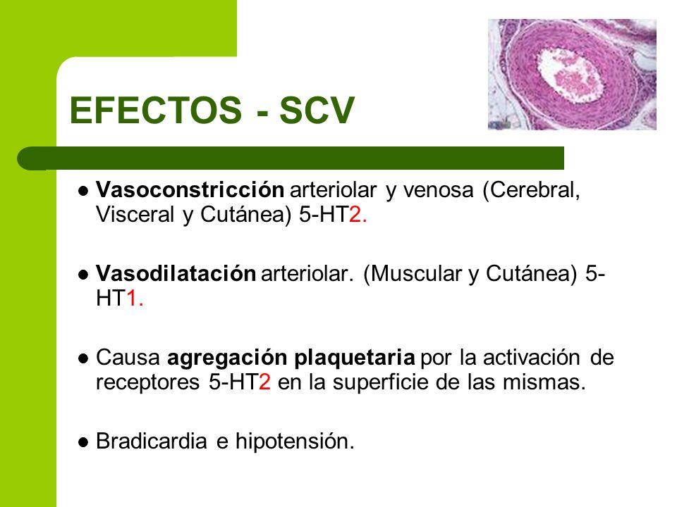 EFECTOS - SCV Vasoconstricción arteriolar y venosa (Cerebral, Visceral y Cutánea) 5-HT2. Vasodilatación arteriolar. (Muscular y Cutánea) 5-HT1.