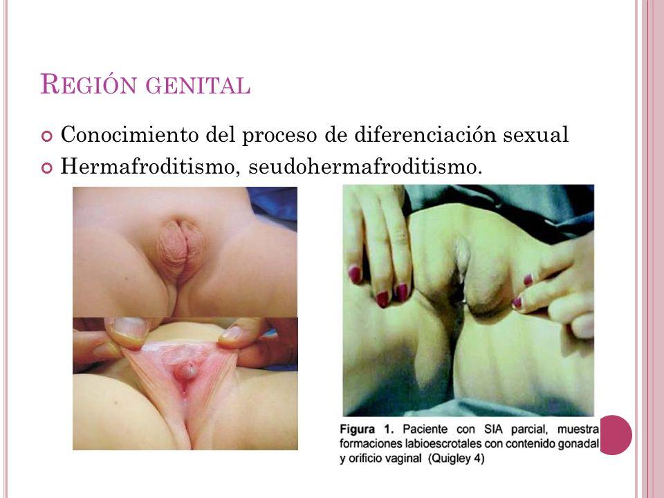 Región genital Conocimiento del proceso de diferenciación sexual