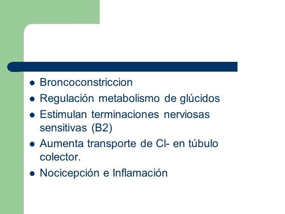 Broncoconstriccion Regulación metabolismo de glúcidos. Estimulan terminaciones nerviosas sensitivas (B2)