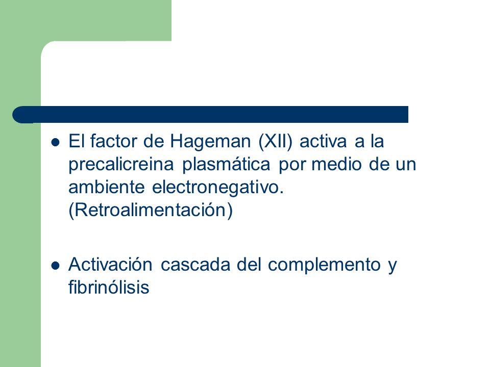 El factor de Hageman (XII) activa a la precalicreina plasmática por medio de un ambiente electronegativo. (Retroalimentación)