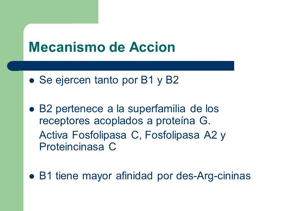 Mecanismo de Accion Se ejercen tanto por B1 y B2