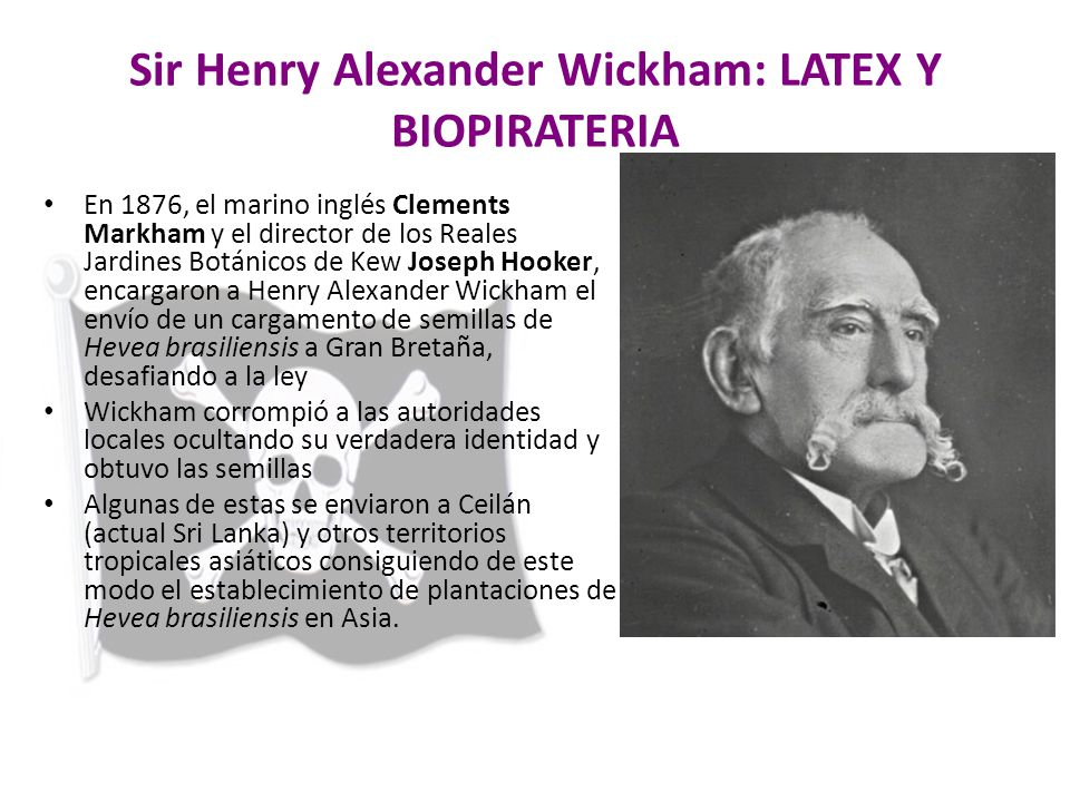 Sir Henry Alexander Wickham: LATEX Y BIOPIRATERIA