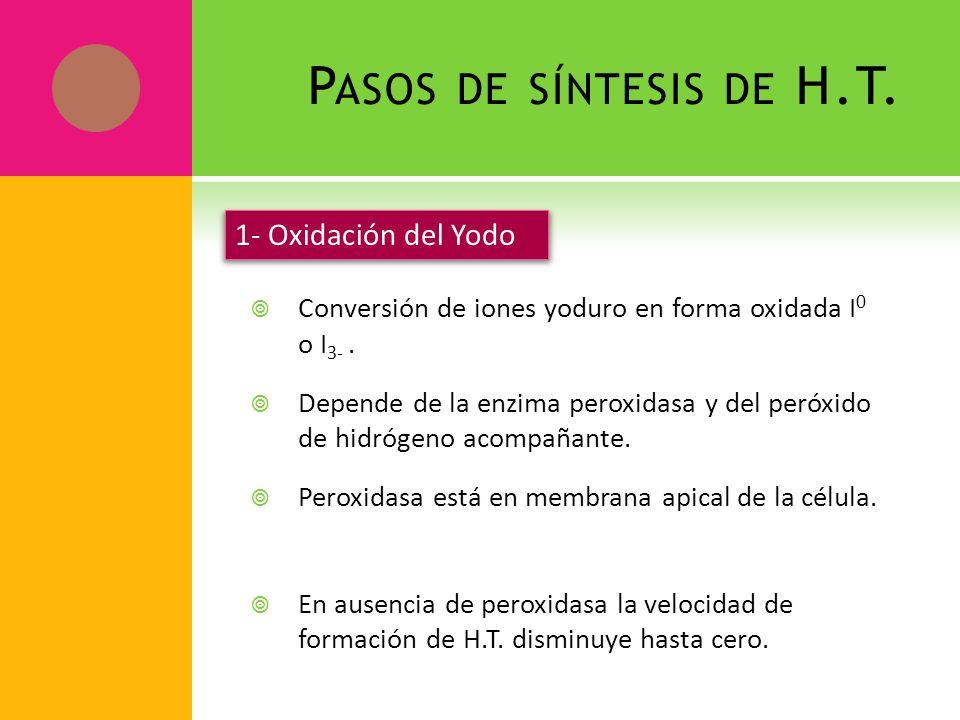 Pasos de síntesis de H.T. 1- Oxidación del Yodo