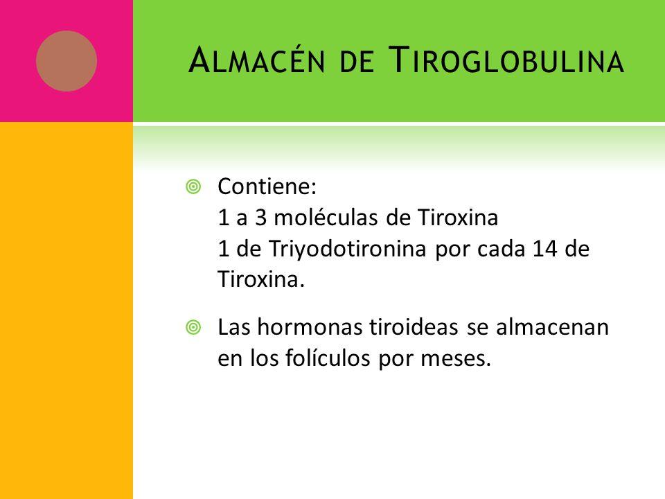 Almacén de Tiroglobulina