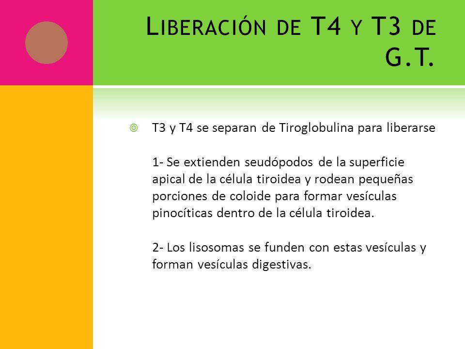 Liberación de T4 y T3 de G.T.
