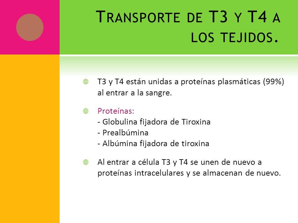 Transporte de T3 y T4 a los tejidos.