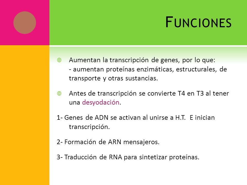 FuncionesAumentan la transcripción de genes, por lo que: - aumentan proteínas enzimáticas, estructurales, de transporte y otras sustancias.