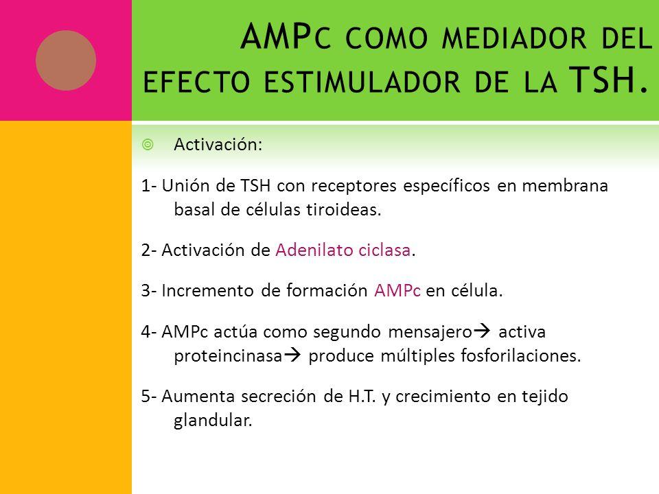 AMPc como mediador del efecto estimulador de la TSH.