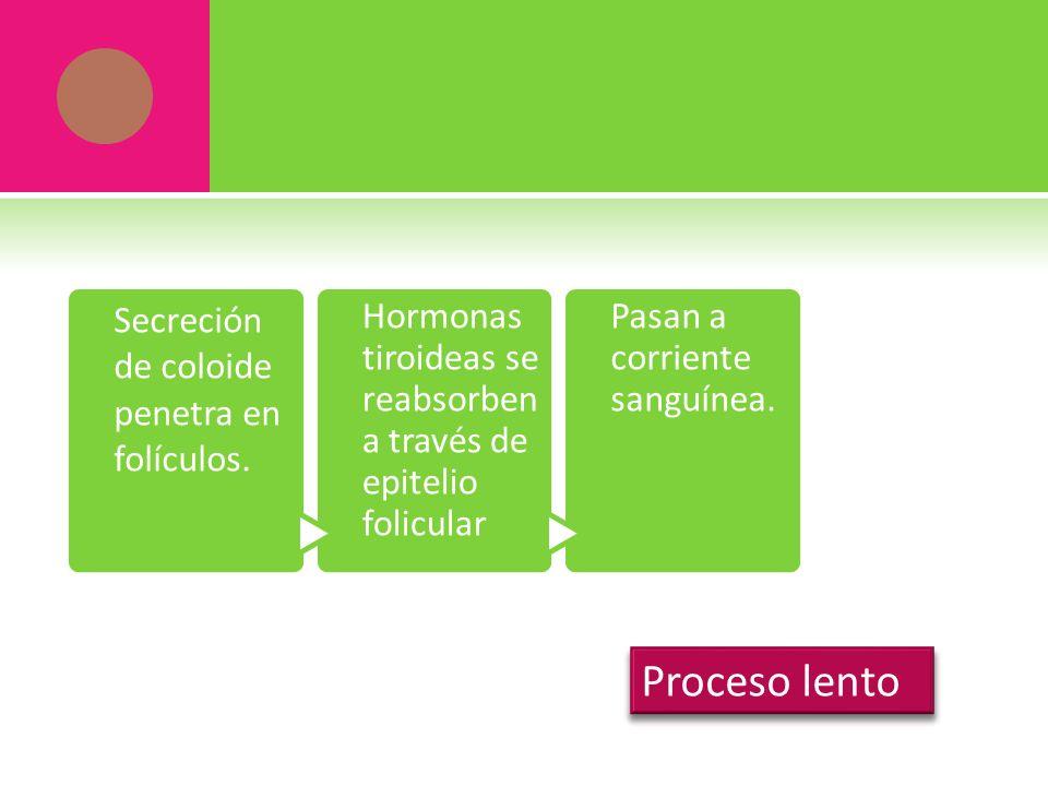 Proceso lento Secreción de coloide penetra en folículos.