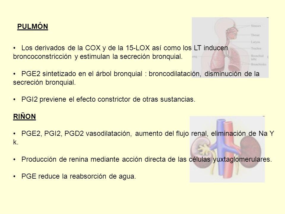 PULMÓN Los derivados de la COX y de la 15-LOX así como los LT inducen broncoconstricción y estimulan la secreción bronquial.