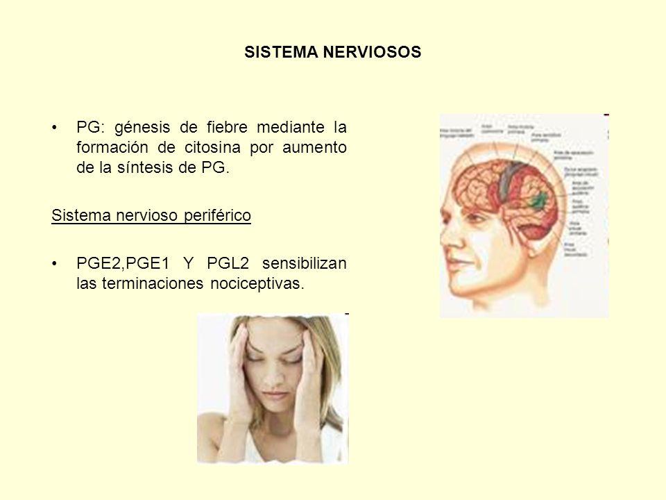 SISTEMA NERVIOSOS PG: génesis de fiebre mediante la formación de citosina por aumento de la síntesis de PG.