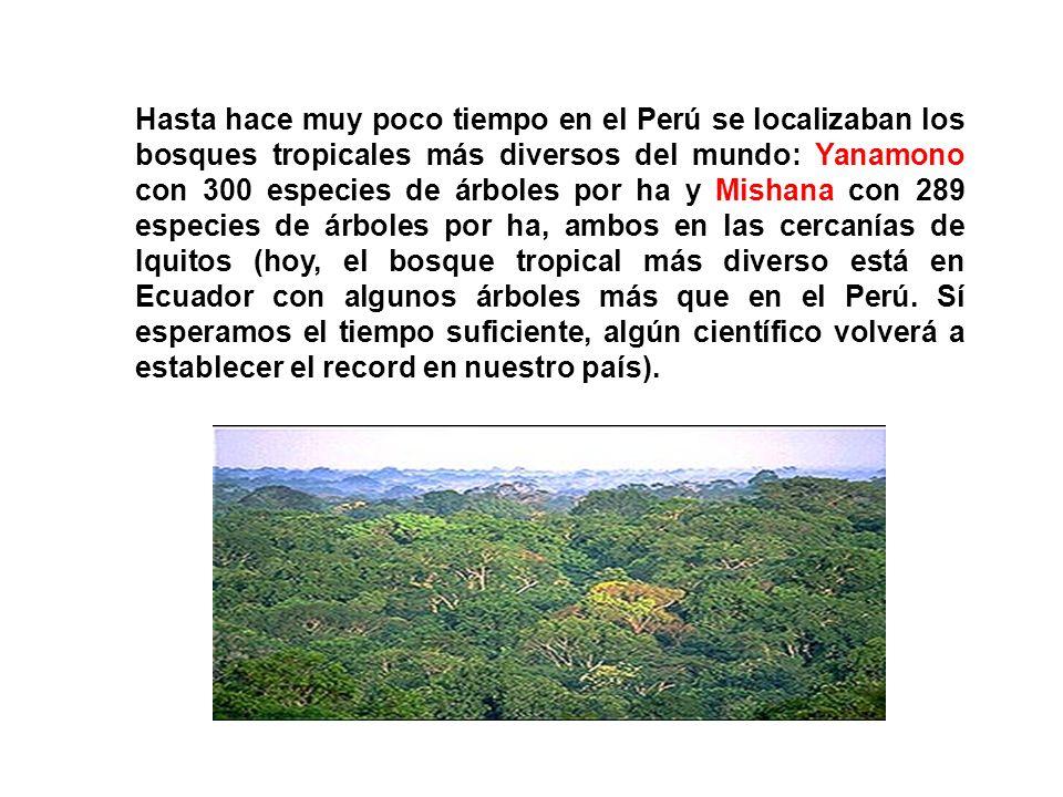 Hasta hace muy poco tiempo en el Perú se localizaban los bosques tropicales más diversos del mundo: Yanamono con 300 especies de árboles por ha y Mishana con 289 especies de árboles por ha, ambos en las cercanías de Iquitos (hoy, el bosque tropical más diverso está en Ecuador con algunos árboles más que en el Perú.