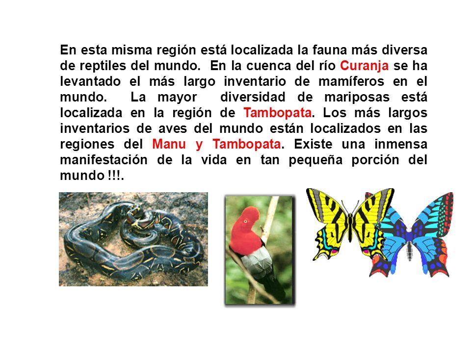 En esta misma región está localizada la fauna más diversa de reptiles del mundo.
