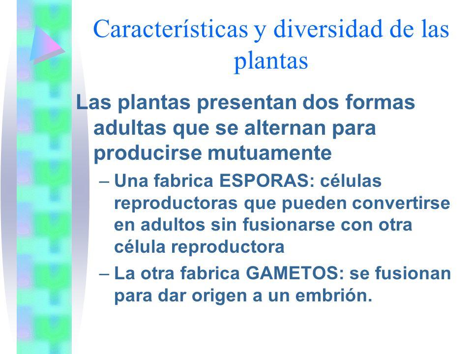 Características y diversidad de las plantas