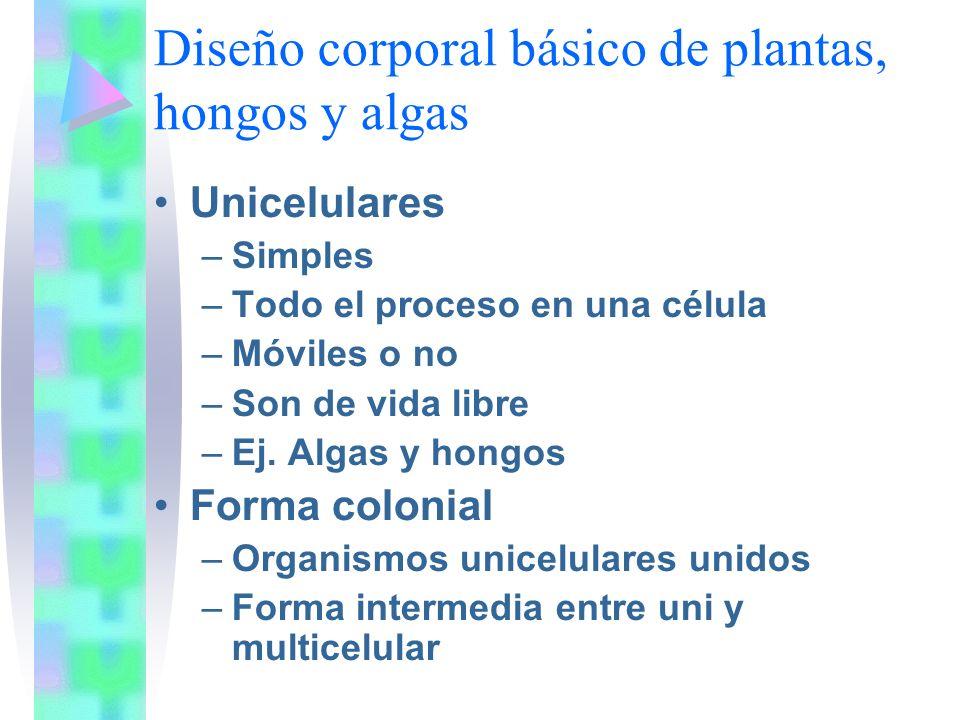 Diseño corporal básico de plantas, hongos y algas