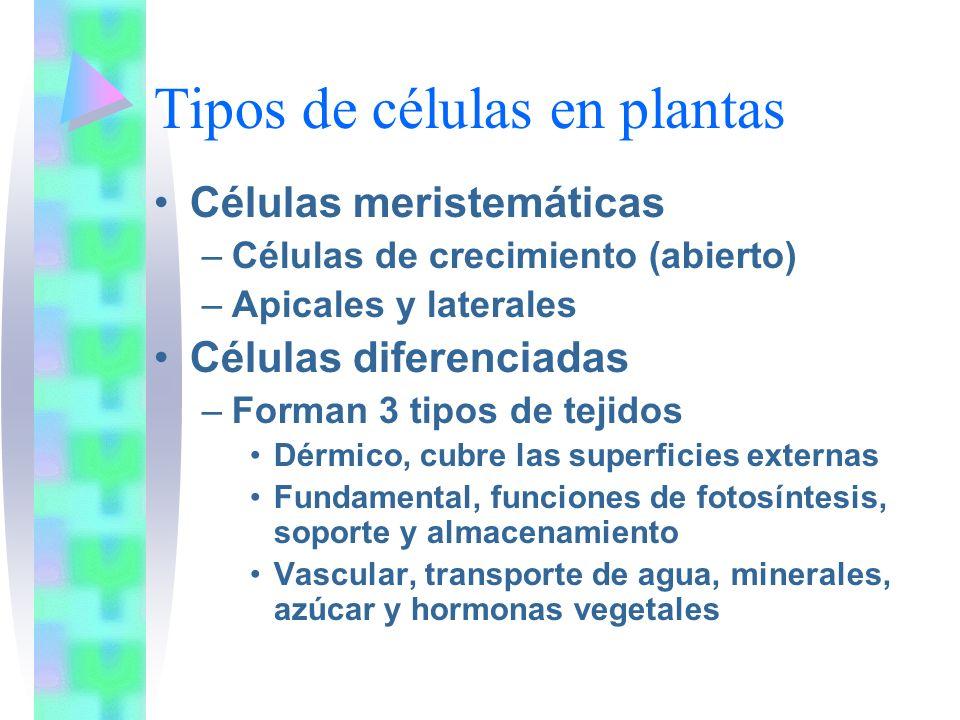 Tipos de células en plantas