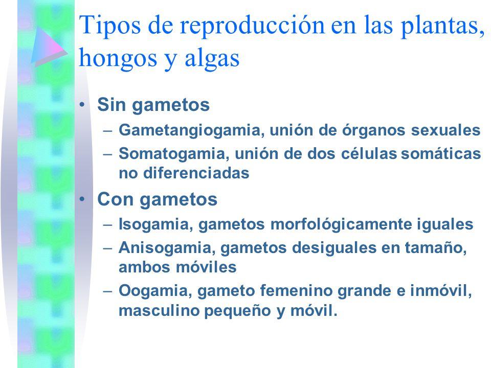 Tipos de reproducción en las plantas, hongos y algas