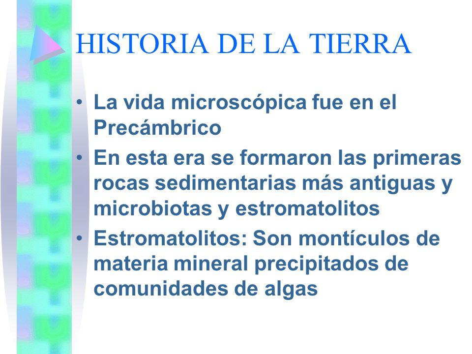 HISTORIA DE LA TIERRA La vida microscópica fue en el Precámbrico