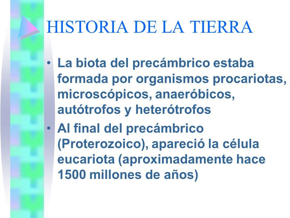 HISTORIA DE LA TIERRA La biota del precámbrico estaba formada por organismos procariotas, microscópicos, anaeróbicos, autótrofos y heterótrofos.
