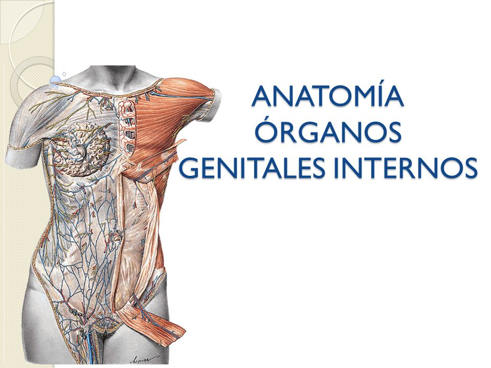 ANATOMÍA ÓRGANOS GENITALES INTERNOS