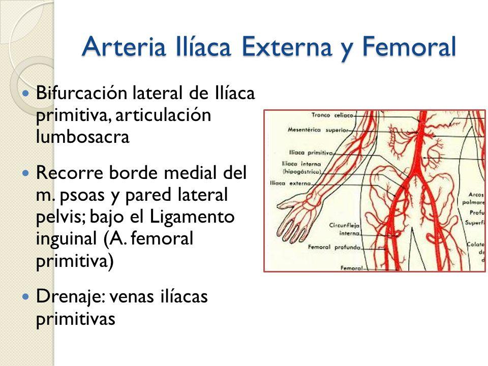 Arteria Ilíaca Externa y Femoral