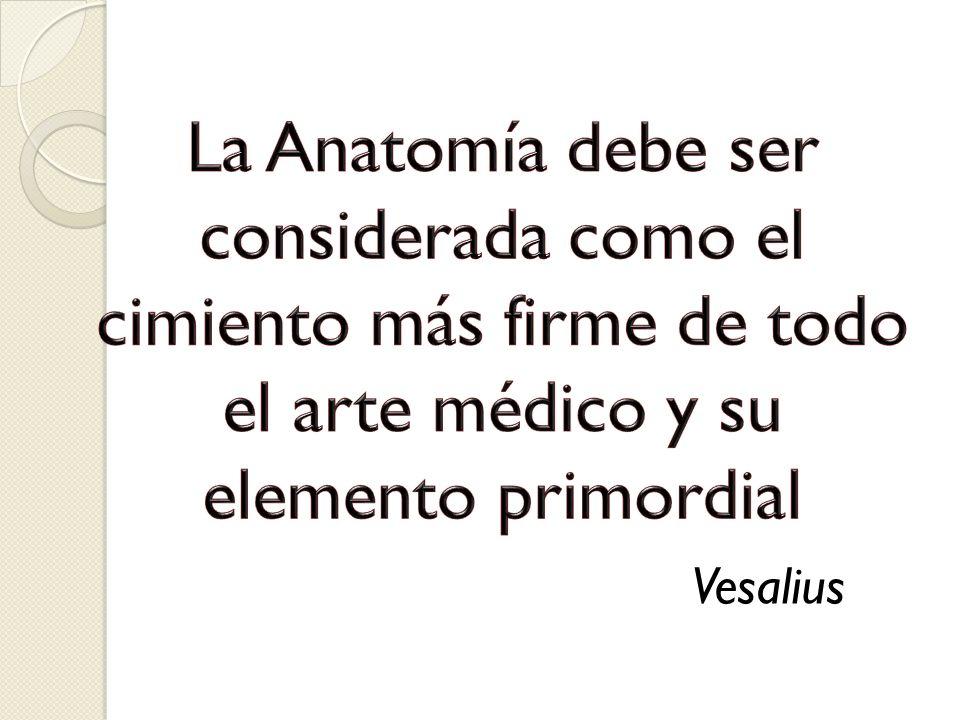 La Anatomía debe ser considerada como el cimiento más firme de todo el arte médico y su elemento primordial