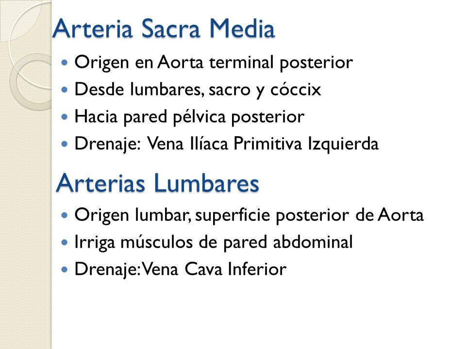 Arteria Sacra Media Arterias Lumbares