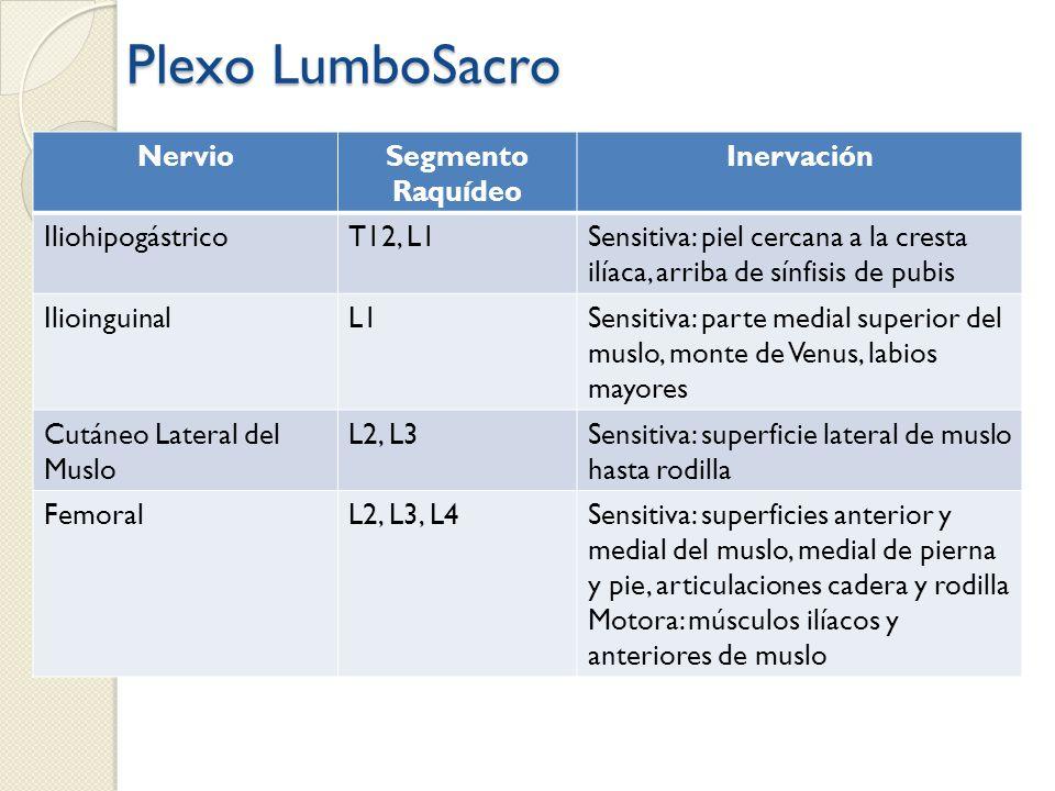 Plexo LumboSacro Nervio Segmento Raquídeo Inervación Iliohipogástrico