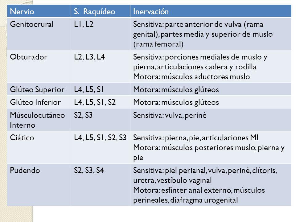 Nervio S. Raquídeo. Inervación. Genitocrural. L1, L2.