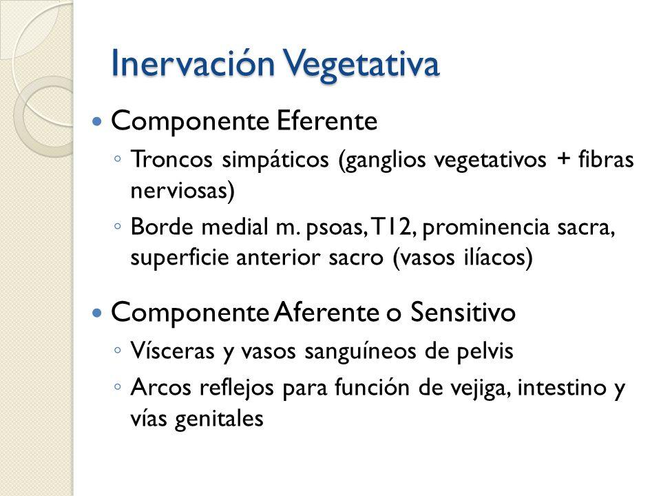 Inervación Vegetativa