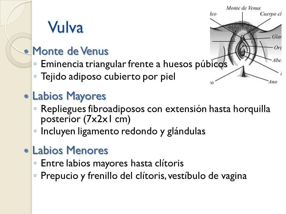 Vulva Monte de Venus Labios Mayores Labios Menores