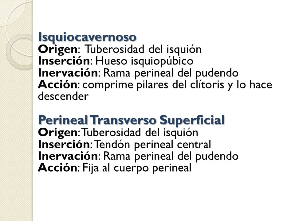 Perineal Transverso Superficial