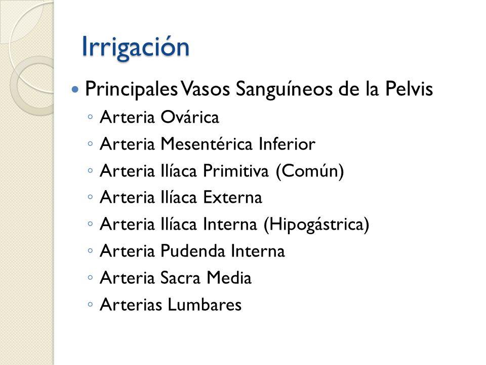 Irrigación Principales Vasos Sanguíneos de la Pelvis Arteria Ovárica