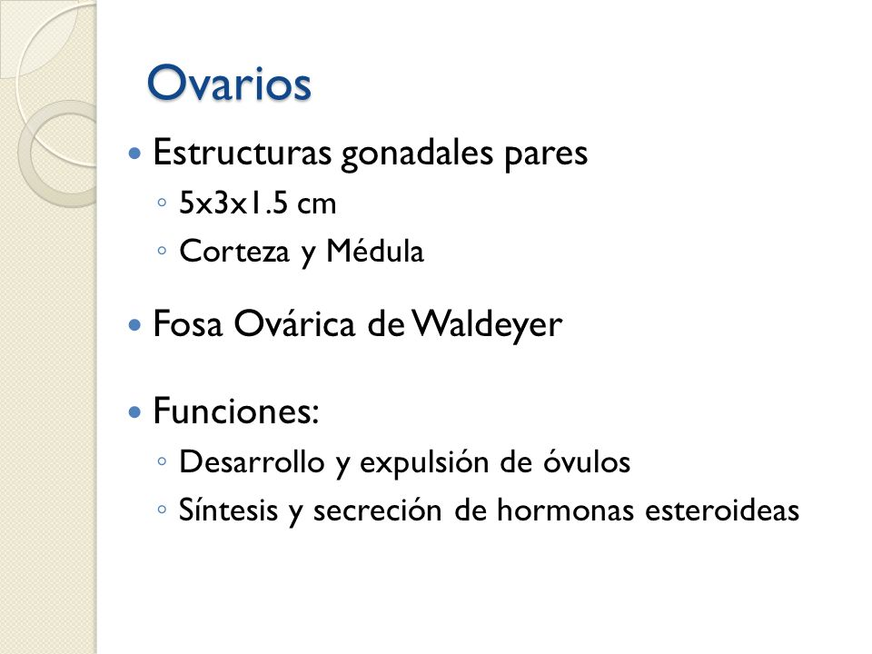 Ovarios Estructuras gonadales pares Fosa Ovárica de Waldeyer
