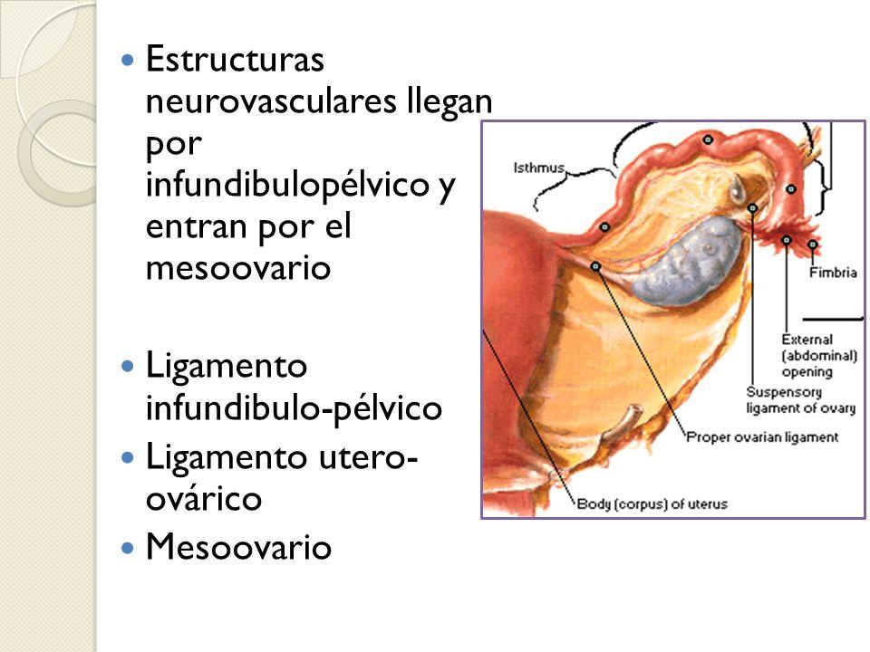 Ligamento infundibulo-pélvico Ligamento utero- ovárico Mesoovario