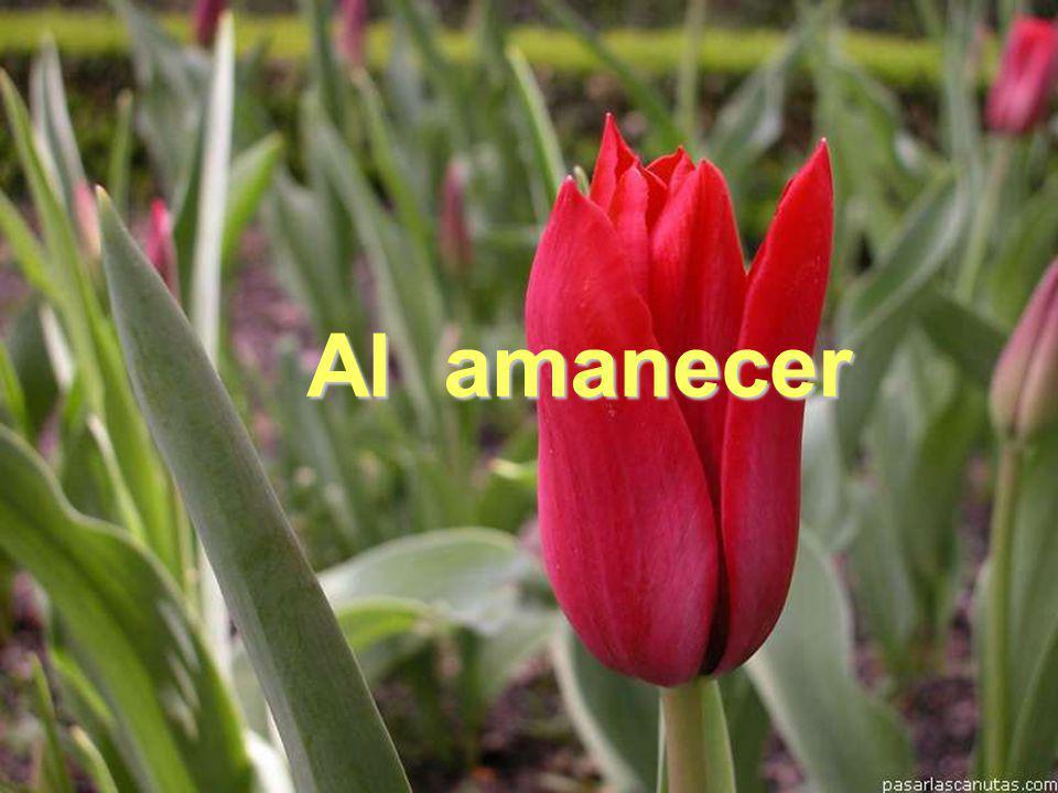Al amanecer www.vitanoblepowerpoints.net