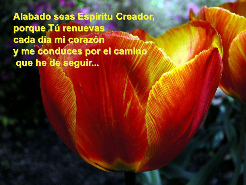 Alabado seas Espíritu Creador, porque Tú renuevas cada día mi corazón