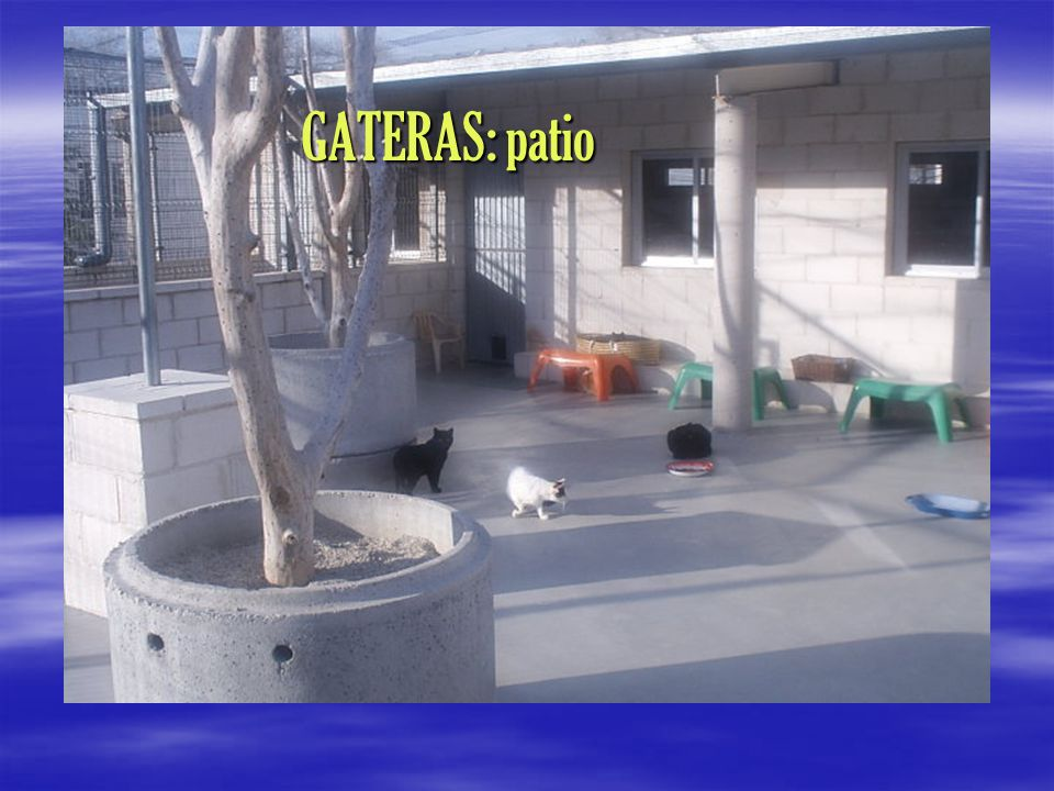 GATERAS: patio