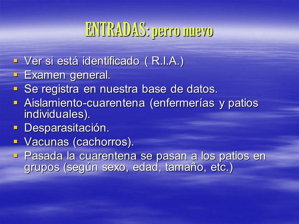 ENTRADAS: perro nuevo Ver si está identificado ( R.I.A.)