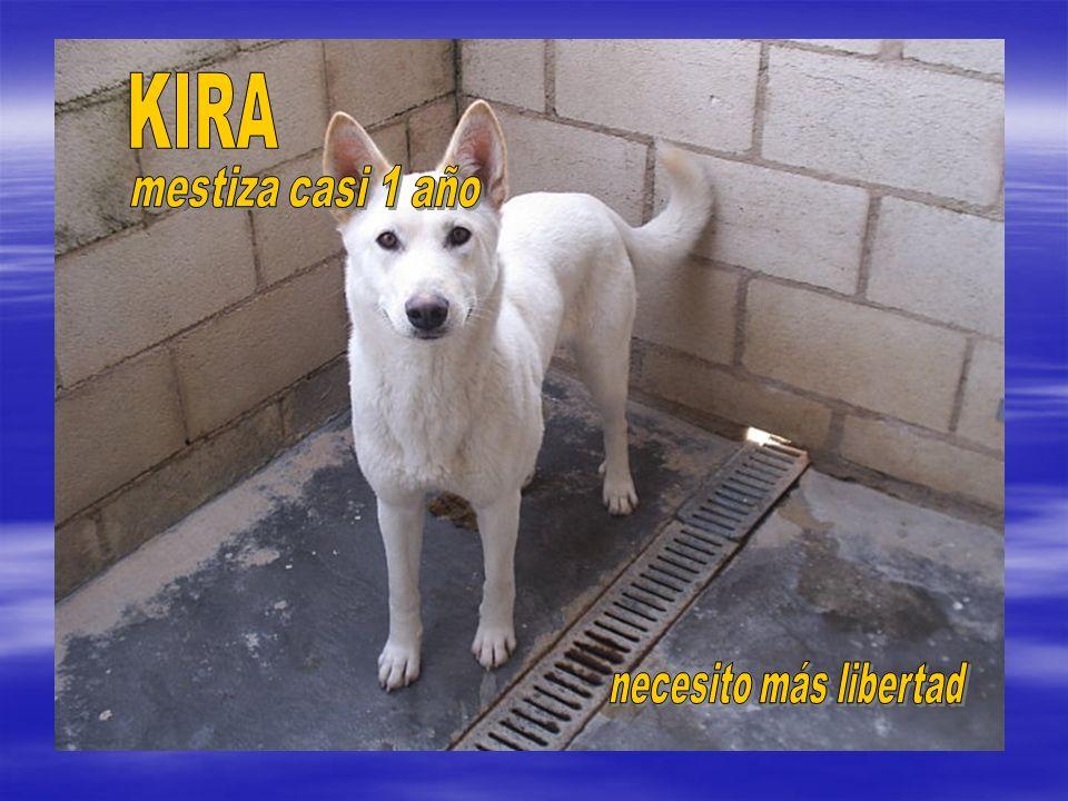 KIRA mestiza casi 1 año necesito más libertad