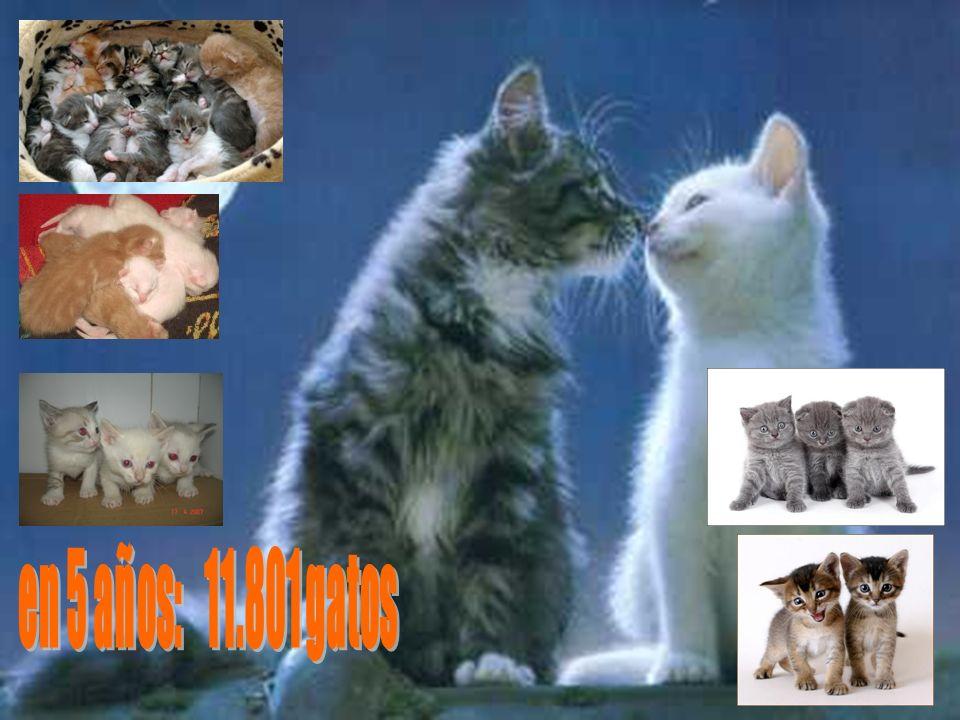 en 5 años: 11.801 gatos